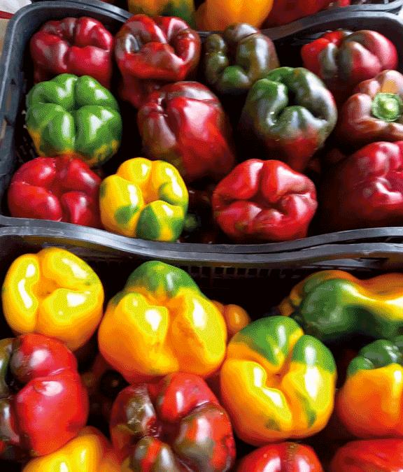 peperoni-carmagnola-agripiemonte-agrimacelleria-prodotti-tipici